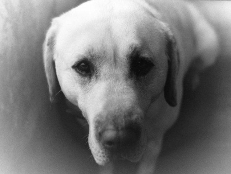 Papp-Zakor Ilka: Irodalom és kutyák IV. / A könyvtáros kutyája