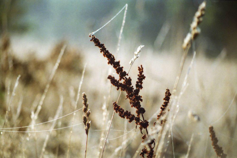 Szászi Zoltán: Fél-vidéki levelek