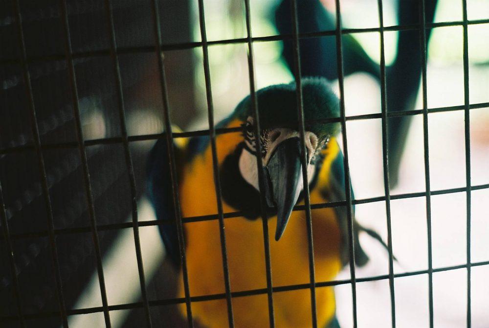 Borcsa Imola: Irodalom és papagájüldözés I.
